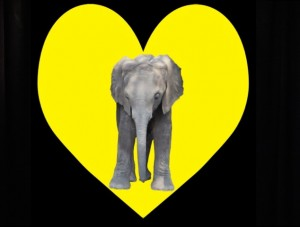 Elephant In My Heart - Music Video  yellow heart with elephant